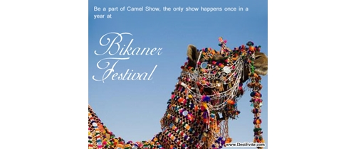 Be a part of camel show Bikaner Festival